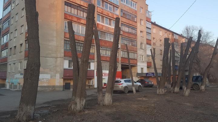 С 2019 года формировать шарообразные кроны на городских деревьях будет «КурганЛес»