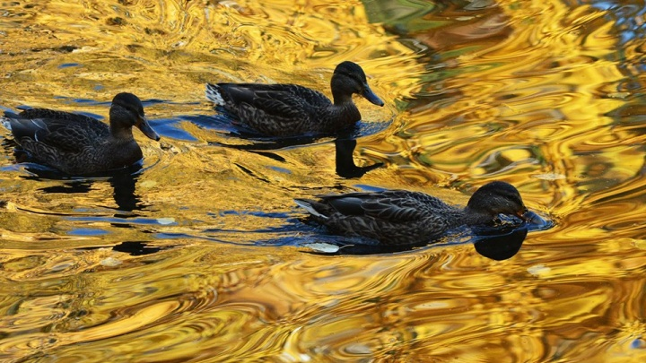 Золотое время: любуемся бабьим летом в инстаграмах челябинцев