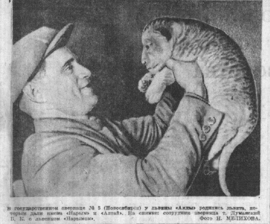 """В Новосибирской прессе первый зоосад упоминается ещё в 1936 году&nbsp;— тогда он назывался Государственный зверинец <nobr class=""""_"""">№ 5,</nobr> работал на Ипподромском базаре и даже ездил на гастроли в Иркутск. В 1938 году у львицы Аиды родилась двойня, львят назвали Алтай и Нарым"""