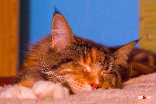 Признайтесь, вы сами трогаете кошке нос, чтобы удостовериться в том, что она здорова