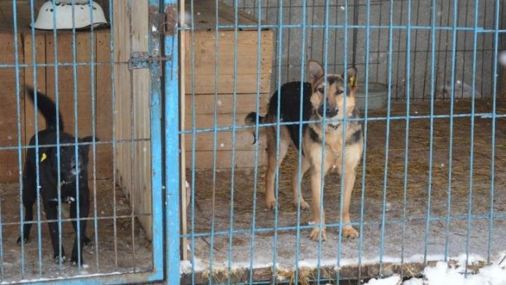 В Перми построят новый муниципальный приют для бездомных животных