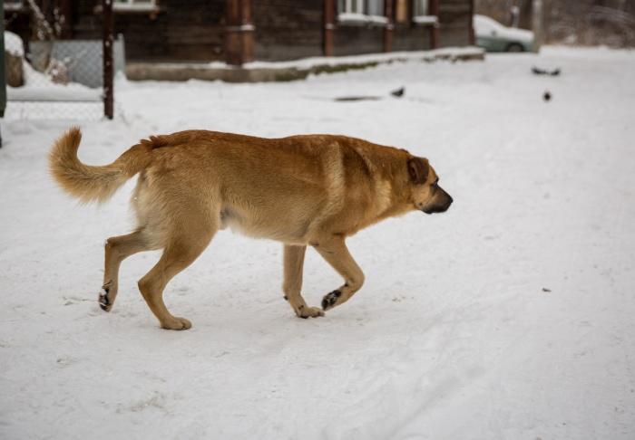 Новосибирец считает, что у собаки не было причин на него нападать