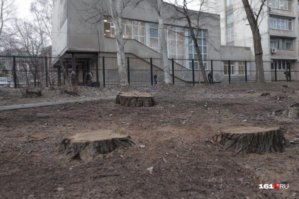 В парке появилось не менее десяти новых пеньков
