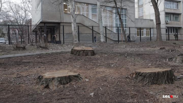В Ростове неизвестные вырубили деревья в парке имени 1 Мая