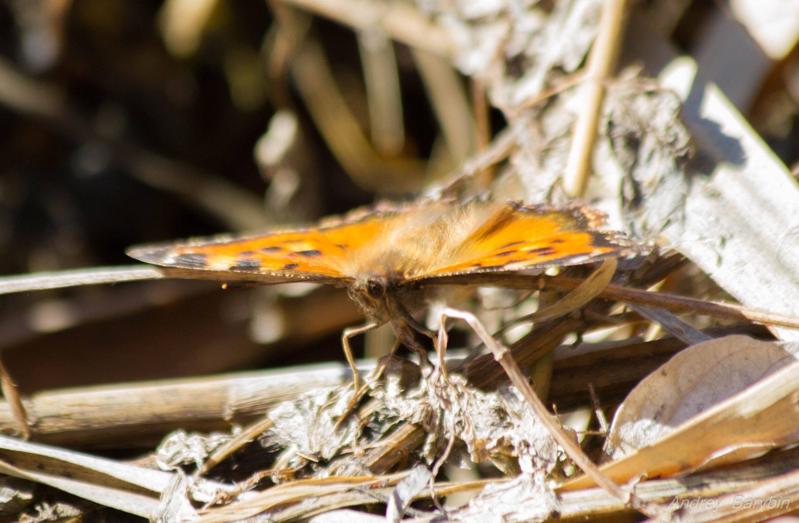Кажется, бабочка до сих пор немного не в себе. Всё-таки пока на улице ещё холодно