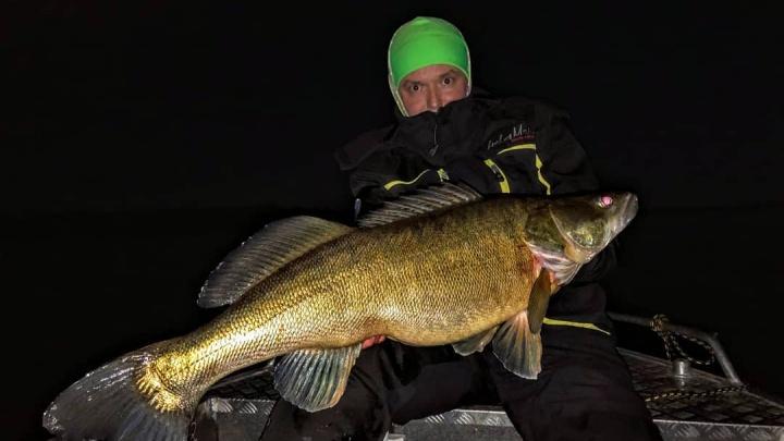 «Это кракен, а не судак!»: рыбак из Самарской области поймал рыбу-рекордсмена
