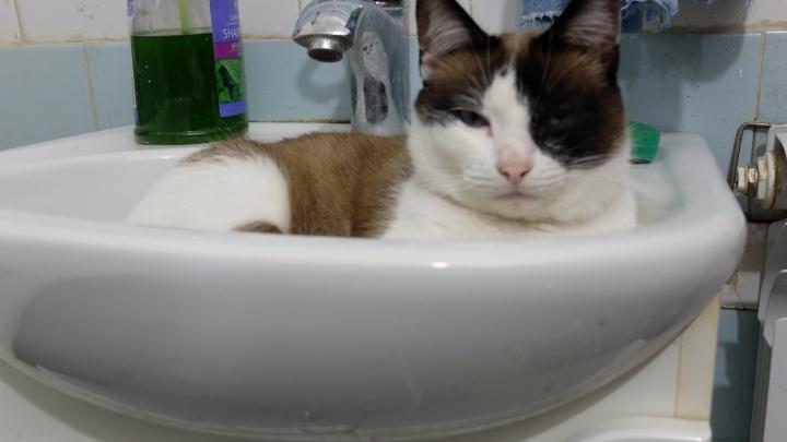 Куда жаловаться на всё: что делать, если с водой в кране что-то не так