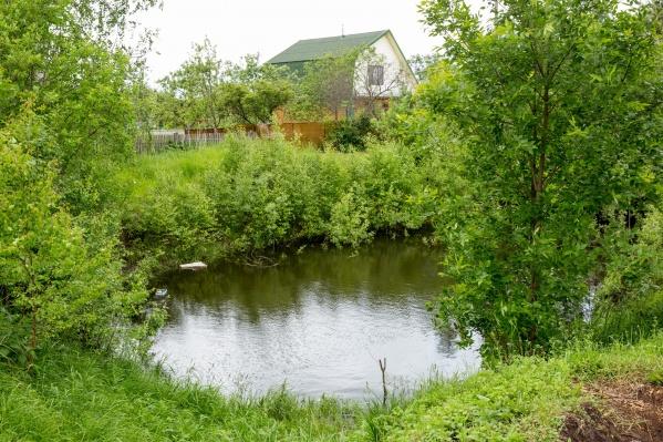 Водоросли заселили в пруд в угличском селе