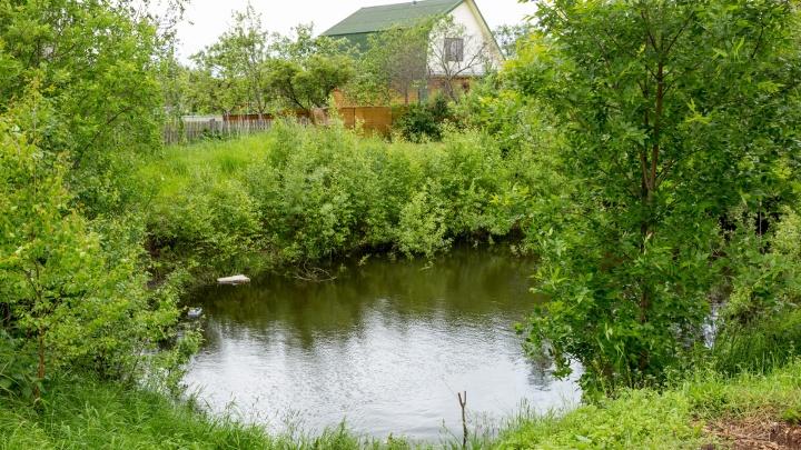 В Ярославской области воду будут очищать с помощью водорослей