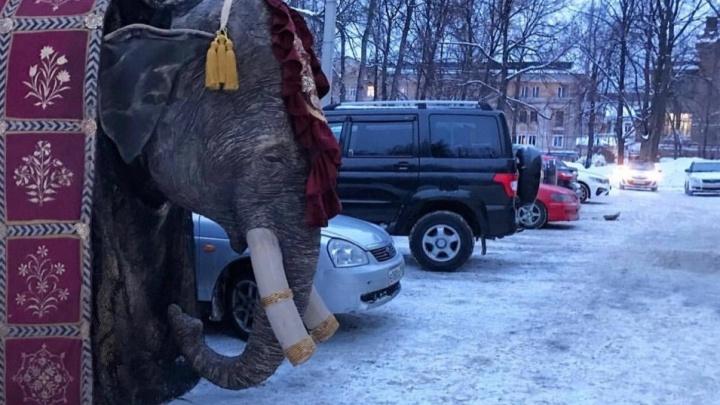 Пермяки обсуждают в соцсетях фото с мерзнущим слоном у Театра оперы и балета
