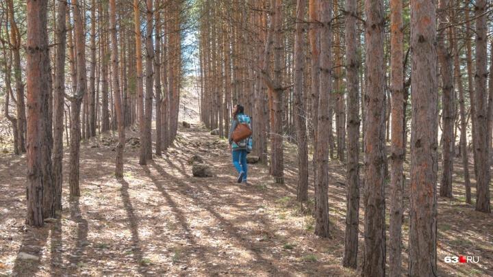 По указке Жириновского: полиция ищет вандалов, срубивших деревья в парке 60-летия Советской власти