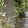 «Воняет тухлятиной»: в реке Миасс в Челябинске всплыла рыба