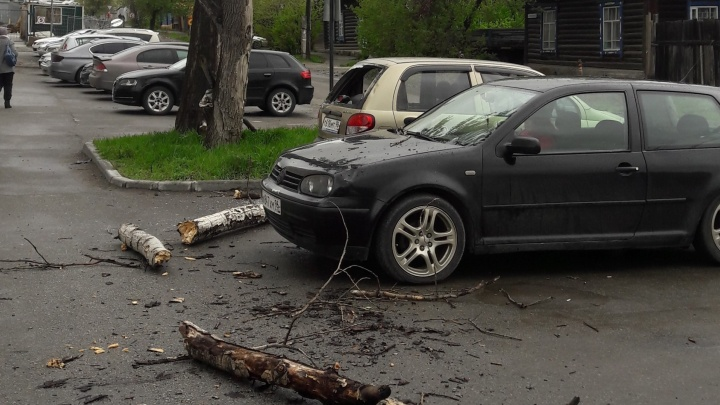 На Автовокзале старый тополь рухнул на припаркованные машины