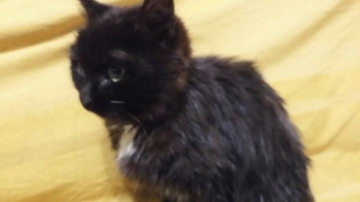 Мяукал неделю: жители Салавата спасли из запертого гаража котёнка