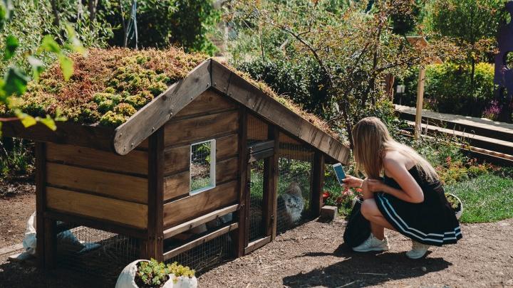 Необычные сады расцвели под Тюменью: подсматриваем 8 дизайнерских идей для своей дачи