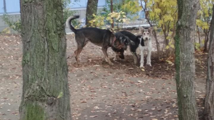 «Вышел по нужде»: под Волгоградом пять собак загрызли мужчину во дворе дома