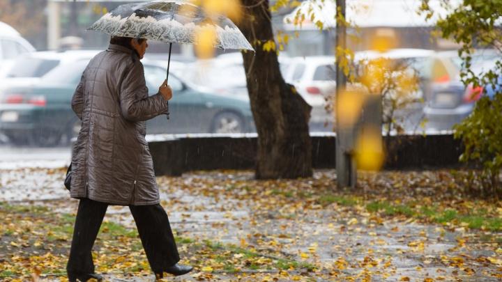 Осень — время читать стихи: волгоградцев зовут в Комсомольский сад на поэтический вечер