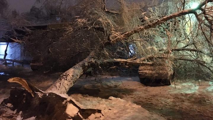 В Волгограде из-за сильного снегопада начали валиться деревья