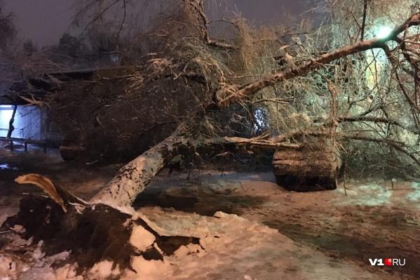 Мощное дерево не выдержало налипшего на ветви снега