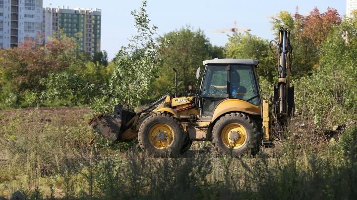 «Это что за вандализм?»: челябинцев возмутил снос деревьев возле главного корпуса ЧелГУ