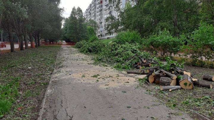 Ради перекладки скандально известной теплосети на Стара-Загоре — Ташкентской вырубят 147 деревьев