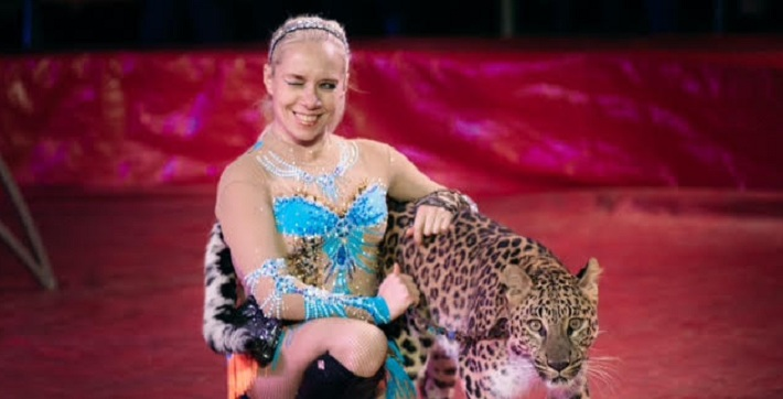 Под купол пермского цирка поднимают леопарда. Общественность возмущена. Разбираемся, жестоко ли это
