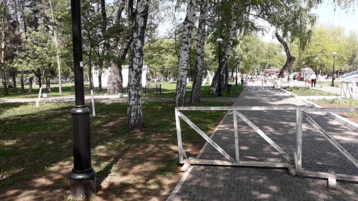 «Вот-вот рухнет на отдыхающих»: в парке Гагарина хотят снести 300-летний дуб