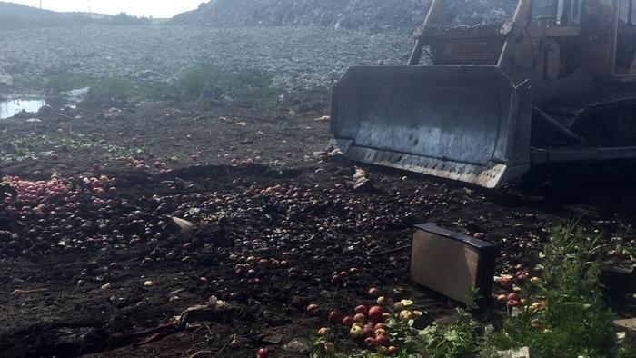 В Ярославской области трактором раскатали почти 800 килограмм санкционных яблок