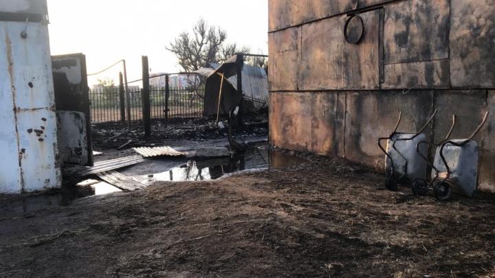 «Отписались задним числом»: волжане ждут финальной точки в расследовании дела о пожаре на конюшне