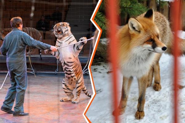 И в цирках, и в зоопарках животные находятся не то чтобы на свободе. А в мире наметилась тенденция на запрет участия в цирковых выступлениях животных