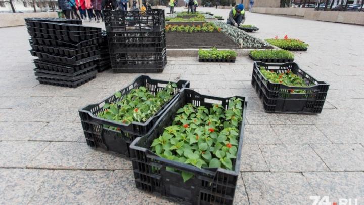 «Добавим опыт Европы»: настроение челябинцам поднимут, высадив в городе яркие цветы