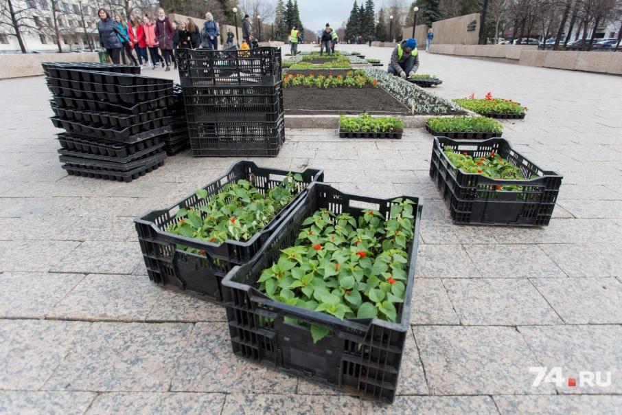 Озеленение центра Челябинска началось сегодня и продлится до конца июня