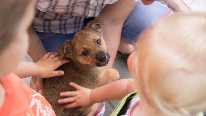 С добрыми руками и сердцем: в Волгограде найдут хозяев брошенным животным