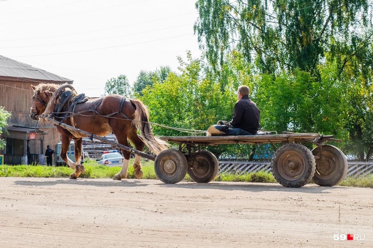 На сельской улочке ездят не только машины