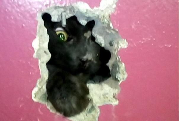 Котёнок получил ссадины и повредил когти