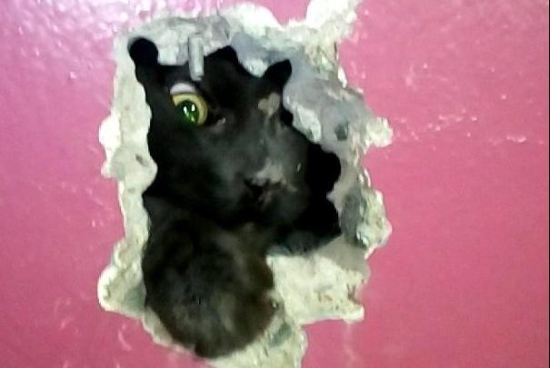 На Сортировке просверлили стену подъезда, чтобы вытащить замурованного котёнка