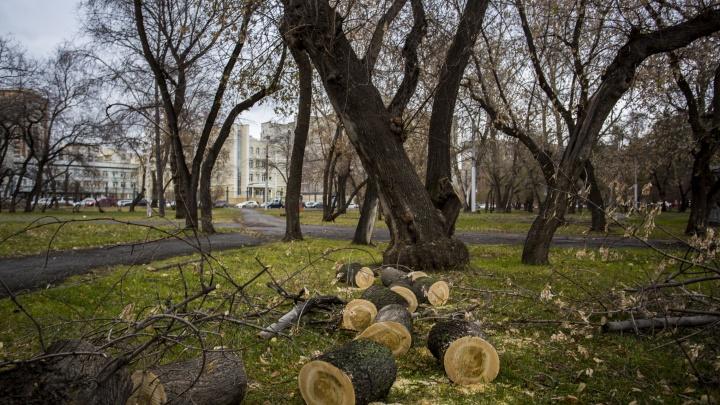 В сквере за оперным театром начали пилить деревья