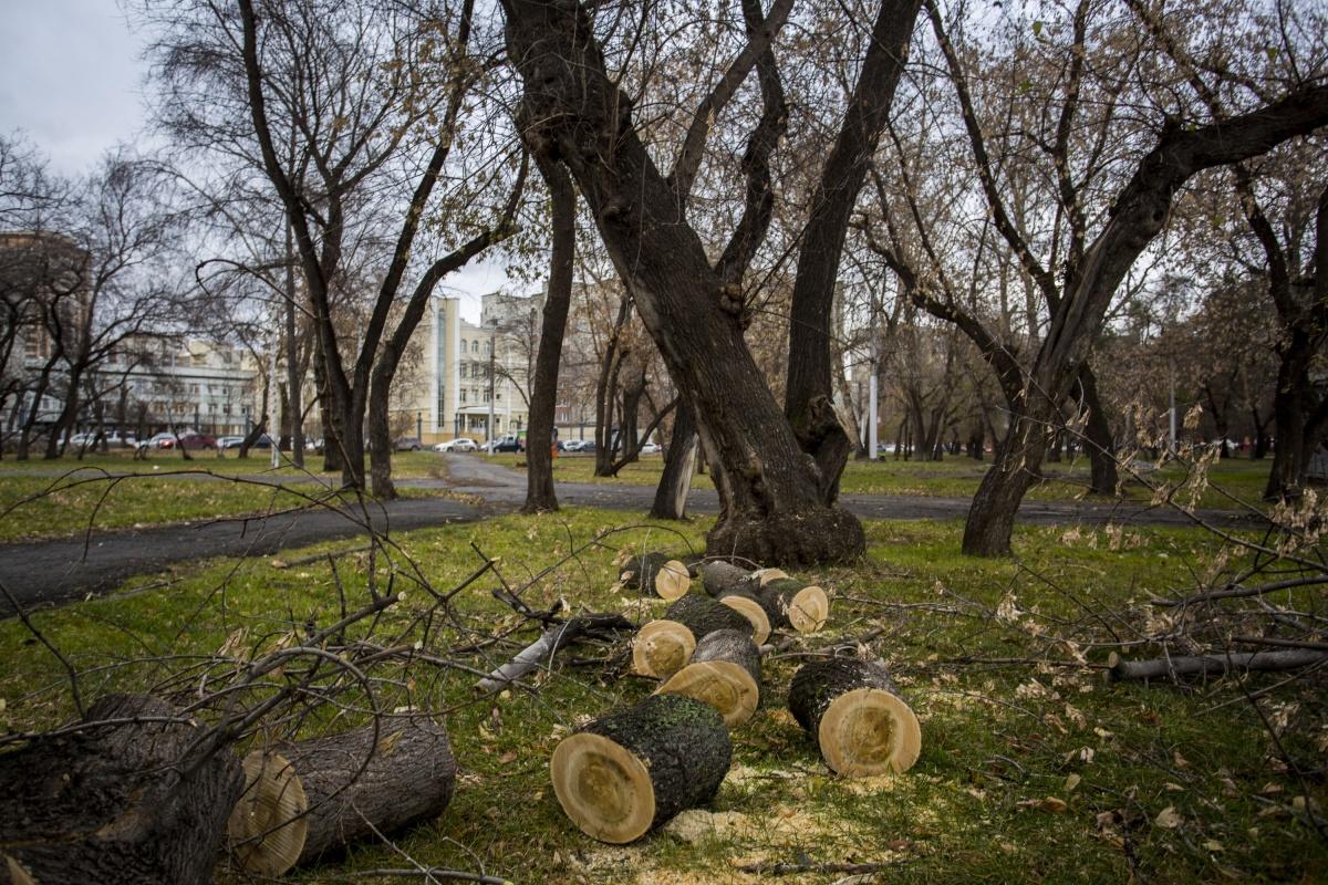 В сквере должны спилить 64 дерева