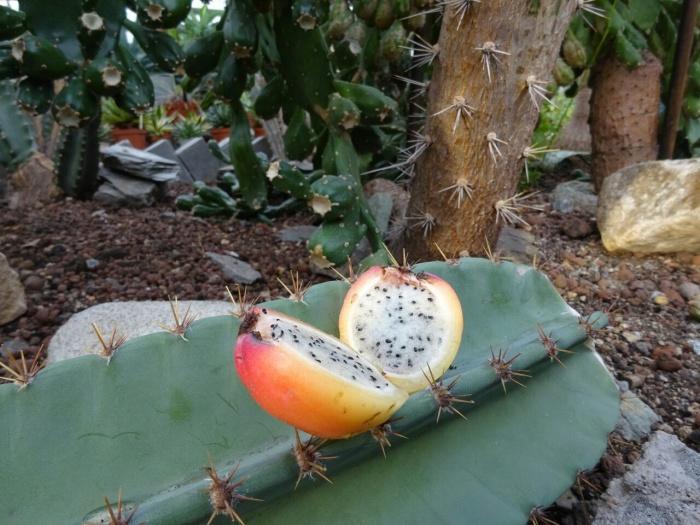 Сам кактус может жить 200 лет