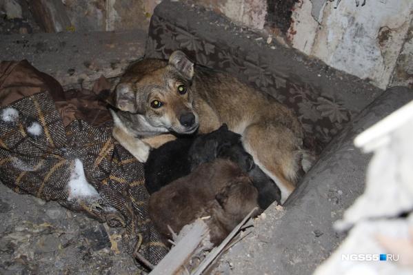 Благодаря новому постановлению Дмитрия Медведева бездомные животные смогут греться в подвалах жилых домов