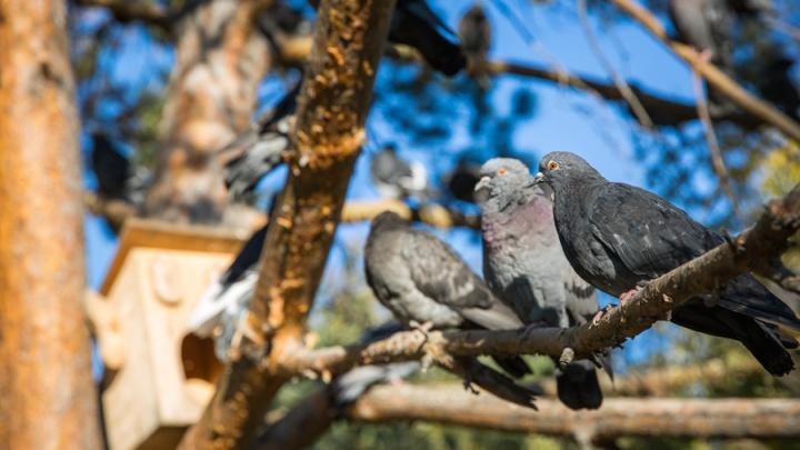 Новосибирцы наткнулись на десятки мёртвых птиц на проспекте Димитрова