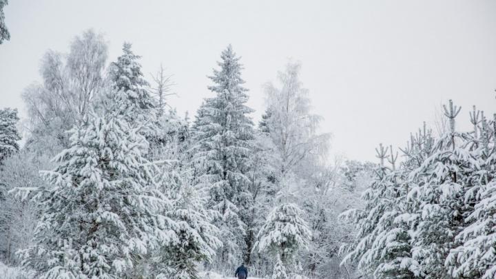 Браконьер убил беременную лосиху в лесу в Ярославской области