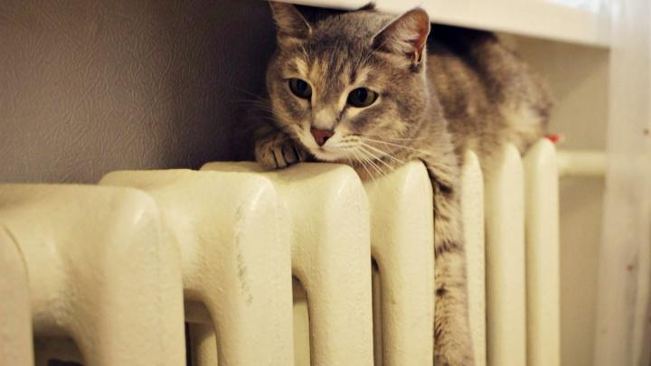Хоть мужика с котом заводи: самарцы требуют дать тепло в квартиры