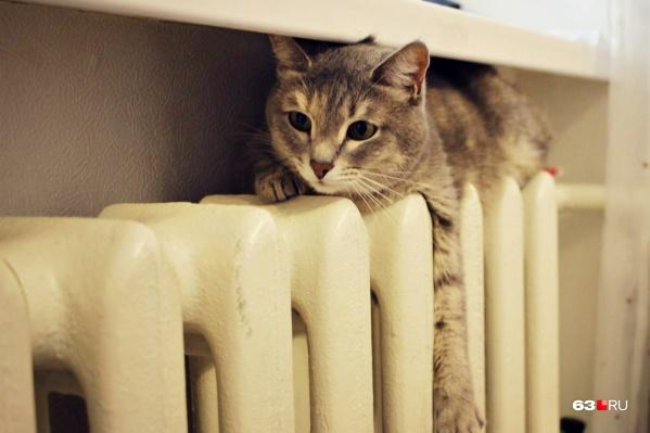 Пока что коты вынуждены ютиться на холодных батареях