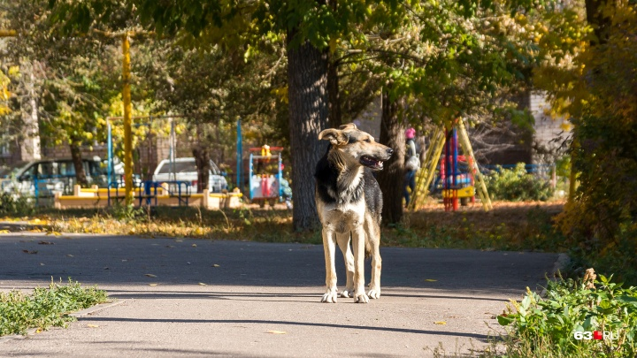 «Ко мне, Мухтар»: на окраине Самары оборудуют площадку для выгула собак