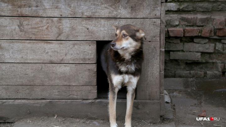 В башкирском селе объявили карантин по бешенству