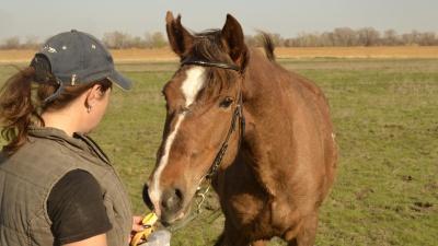 «Ребята! Мы это сделали!»: волгоградцы спасли от убоя молодую лошадь и теперь ищут ей имя