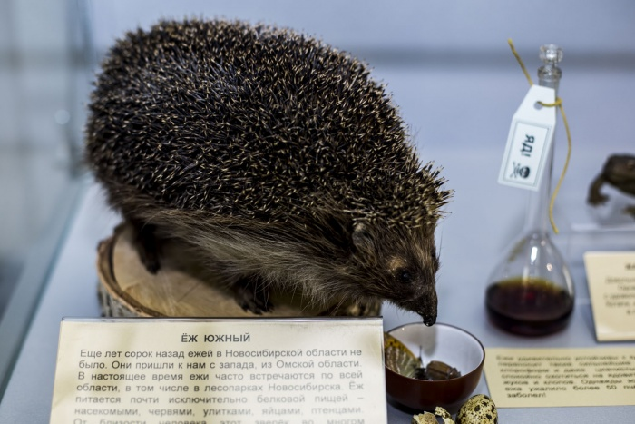 Организаторы экспозиции сделали различные сценки с чучелами животных, которые демонстрируют их особенности. Например, по словам автора выставки, организм ежа очень устойчив к ядам