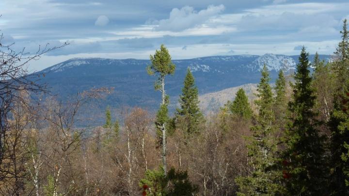 Послали лесом: у нового нацпарка Южного Урала могут забрать 200 миллионов рублей в пользу коттеджей