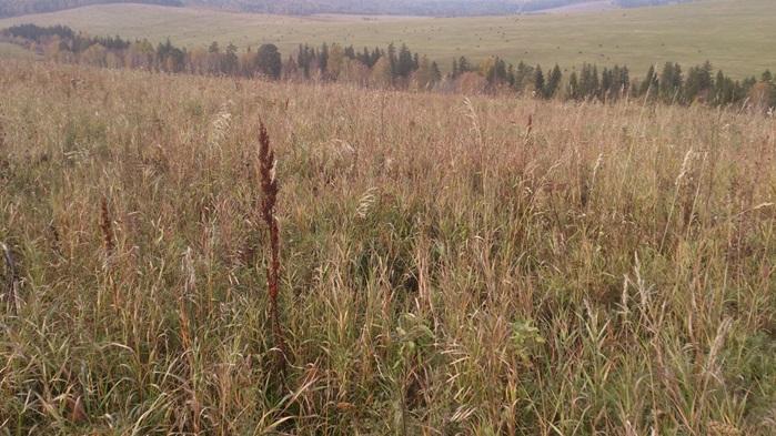 Владельца земли в крае оштрафовали на 700 рублей за пустующий участок